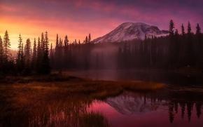 Картинка лес, свет, горы, туман, вечер, утро