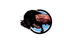 Картинка сила, рога, копыта, Бизон