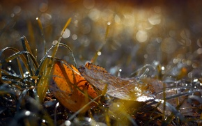 Обои листья, природа, осень