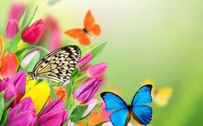 Картинка бабочки, цветы, весна, colorful, тюльпаны, fresh, yellow, flowers, beautiful, tulips, spring, purple, butterflies