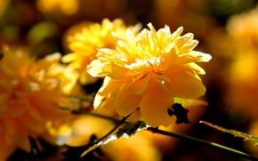 Картинка цветок, солнце, макро, ветка, весна