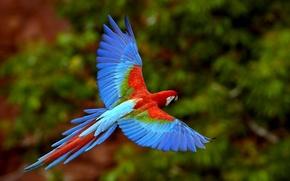 Обои цвет, яркий, птицы, попугай
