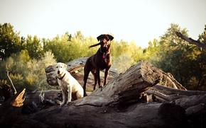 Картинка собаки, природа, дерево