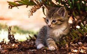 Обои листья, малыш, котёнок