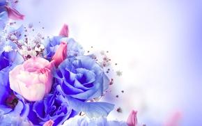 Картинка цветы, розы, фиолетовые, розовые