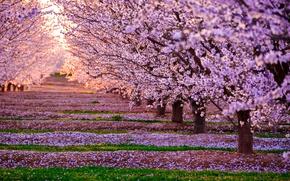 Картинка свет, деревья, цветы, природа, весна, сад