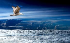 Картинка море, небо, природа, птица