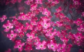 Картинка цветы, ветка, много