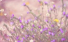 Картинка цветы, стебли, бутоны, боке