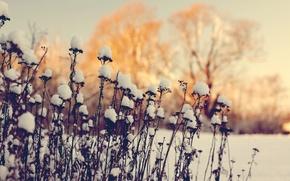 Картинка зима, макро, снег, сухостой
