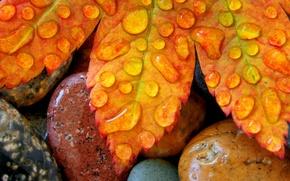 Обои осень, капли, Лист