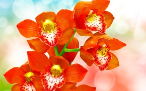 Картинка блики, фон, красные, орхидеи, боке, крупным планом