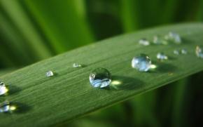 Обои роса, лист, вода, зеленый, капли