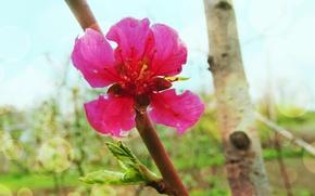 Картинка деревья, цветы, весна