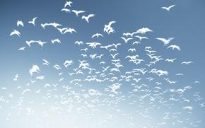 Картинка небо, птицы, фон