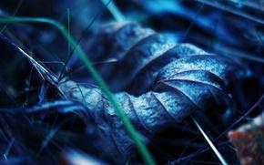 Картинка прожилки, макро, земля, лист, сухой, трава, осень