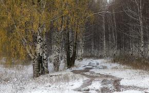 Картинка дорога, осень, снег, берёзы