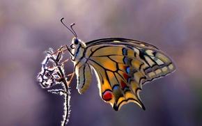 Картинка фон, бабочка, растение