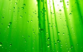Обои Фон, Зеленый, Капли