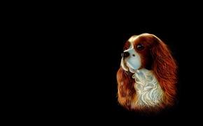 Картинка фон, собака, арт, спаниель