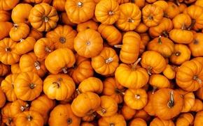 Картинка тыквы, оранжевые, много