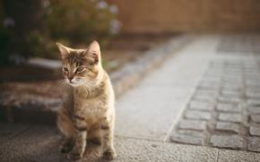 Обои кошка, асфальт, котенок, боке