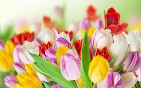 Картинка цветы, colorful, тюльпаны, tulips, spring