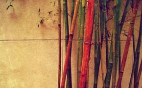 Обои бамбук, разный, цветной, стена