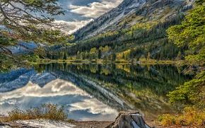 Картинка деревья, горы, озеро, пень