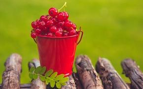 Обои лето, ягоды, смородина, красная, ведерко