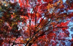 Картинка небо, деревья, осень, листья, багрянец