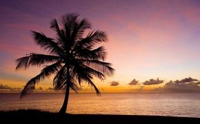 Картинка песок, море, пляж, небо, вода, закат, природа, пальма, фон, дерево, обои, силуэт, wallpaper, широкоформатные, background, …