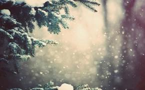 Картинка снег, елка, ветка