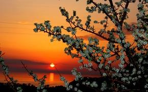 Картинка небо, солнце, облака, закат, цветы, дерево