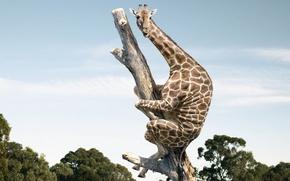 Картинка страх, жираф, ствол