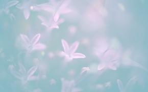 Картинка цветы, flower, pastel