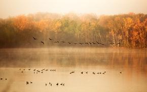 Картинка осень, лес, туман, река