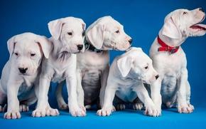 Картинка собаки, фон, щенки