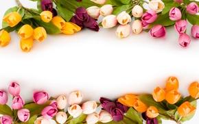 Картинка весна, цветок. природа, тюльпаны. цветы