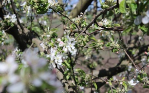 Картинка красота, Дерево, весна