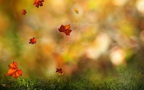 Картинка падают, листья, цвета, осень, лес, капли, роса, макро, природа, кружится, размытость, wallpaper., боке, воды, осени, ...
