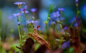 Картинка осень, листья, цветы, растения, сад