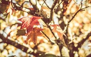 Картинка лист, дерево, растения, весна, натюрморт, tree, spring, still life, leaf, plants, warm, maple leaves, теплый, …