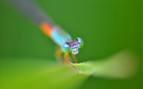 Картинка глаза, голова, стрекоза, насекомое