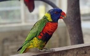 Картинка wallpaper, colourful, bird, animal, magnificent, splendid