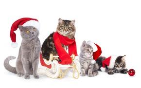 Картинка кошки, коты, шарик, шарф, котята, сани, колпаки