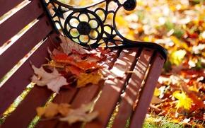 Картинка осень, листья, макро, скамейка, парк, желтые, размытость, лавочка, лавка, оранжевые, скамья