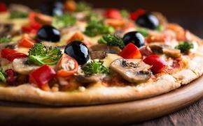 Обои петрушка, сыр, помидоры, пицца, маслины, грибы, блюдо
