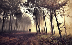 Картинка road, alone, man, morning fog in the forest