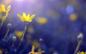 Картинка цветы, синий, желтый, фон, widescreen, обои, wallpaper, цветочки, широкоформатные, background, боке, полноэкранные, HD wallpapers, широкоэкранные, …